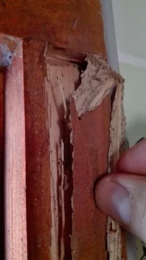 Efectos sobre la madera de un ataque de termitas