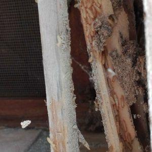 Madera atacada por termitas