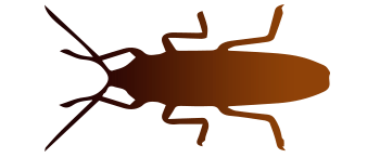 Cucaracha americana<br /> (Periplaneta americana)