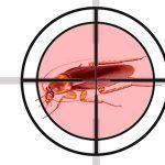 como matar eliminar cucarachas