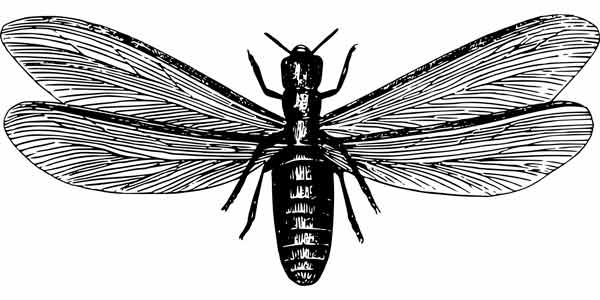 Termitas con alas