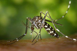Enfermedades transmitidas por insectos