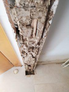 Termitas en el marco de una puerta