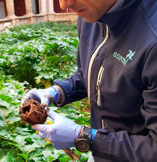 Ecomol - Inspección de termitas