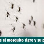 Todo sobre el mosquito tigre y prevención