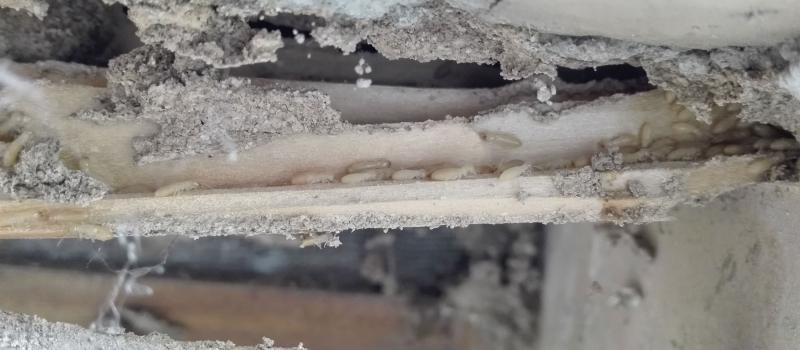 Efecto de las termitas. Cómo eliminar termitas
