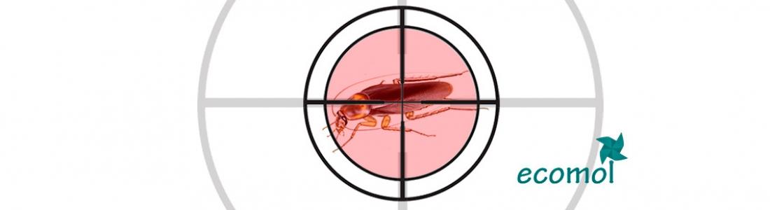 C mo eliminar cucarachas en casa ecomol for Como eliminar cucarachas pequenas en casa