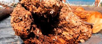 control y tratamiento de termitas Ecomol